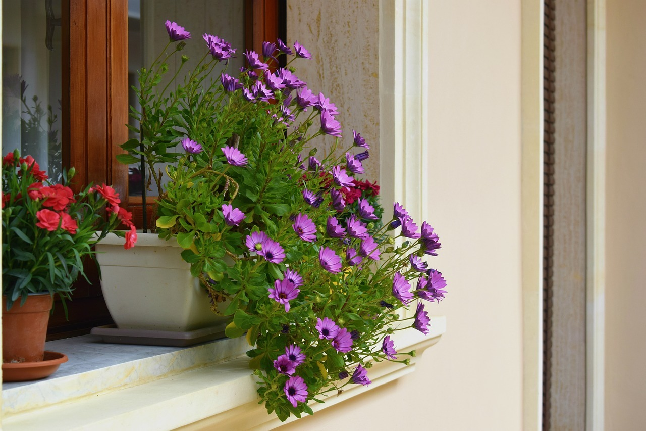 Homes in Needham MA - Add a touch of color to your Needham MA home by planting some flowers.
